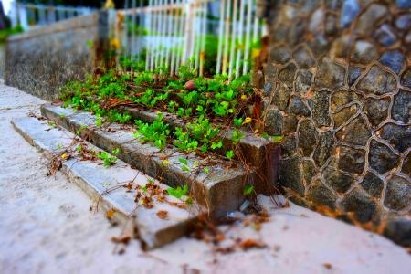 Leaves growing through old gate by the sea  Zdjęcie Seryjne