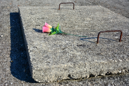 one plastic rose on concrete grave photo