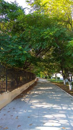 Old, shady alley in summer in Novorossiysk. Trees on one side & a high fence on the other one along a paved walkway. Lenina street sidewalk. 写真素材
