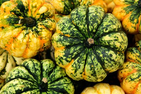 Closeup of many colorful pumpkins in the market with colorful drawing in autumn Фото со стока