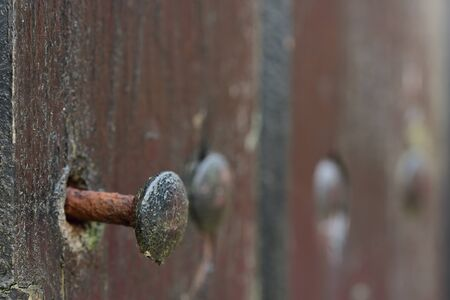 Closeup of a rusty nail peeking out of an old wooden wall