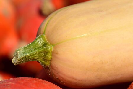 Closeup and close-up of a butternut gourd as a background