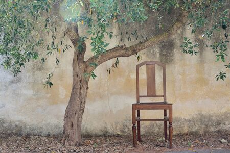 Outside a bright old rustic plastered wall outside stands a dry olive tree with an old wooden chair next to it in Sicily Banco de Imagens