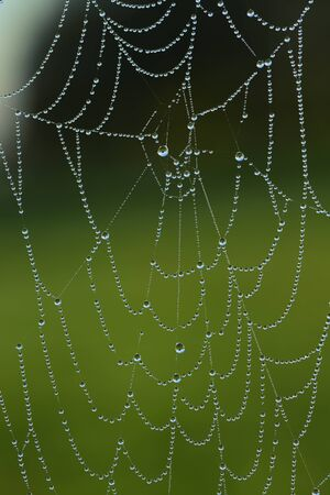 A spiderweb hangs in the fall at morning fog full of water droplets in which the landscape reflects in the morning