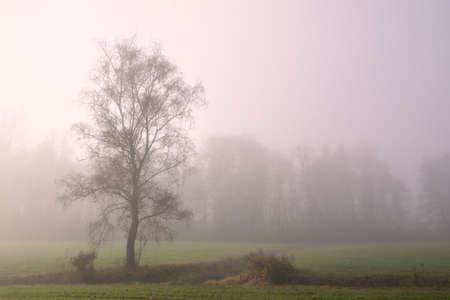In autumn a tree stands lonely in the early morning mist in the landscape