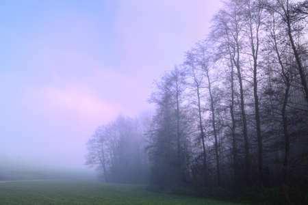 Several trees stand alone in the autumn in the early morning mist in the landscape, at dawn