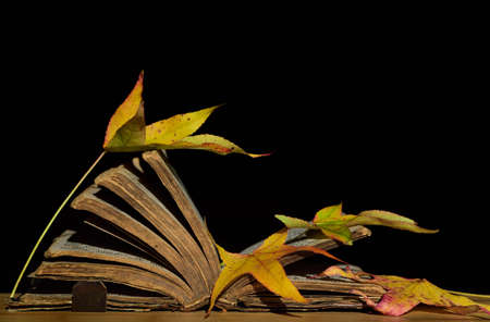 On an antique open book made of leather, with thick leaves, fall leaves of autumn that have fallen on it lie against a dark background Banco de Imagens