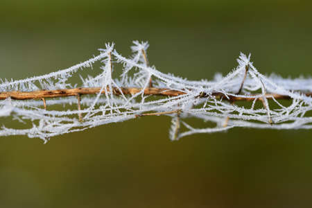 Close up of a dry cobweb covered branch covered in frost and ice crystals against a brown background with space for text
