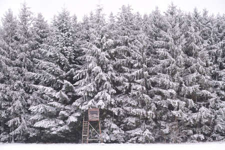 At the edge of the forest there are tall conifers, which are covered with snow, in fog and cloudy weather, behind a small hunter's stall