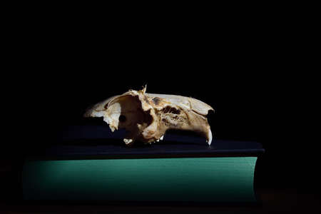 The bony skull of a rat lies against a dark background on a closed book with green pages as a close-up