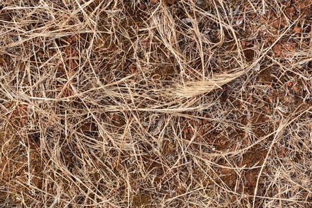 Background of arid grass on dry earth during drought in summer