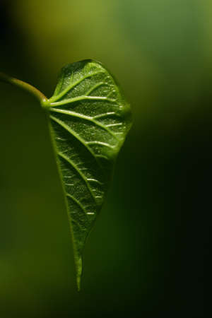 Close up of a green leaf against a green background in nature