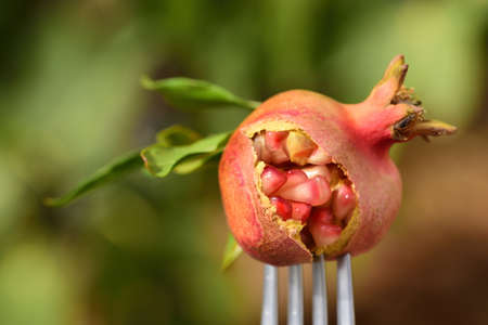 Close up of a small pomegranate stuck on a fork against a light background in nature