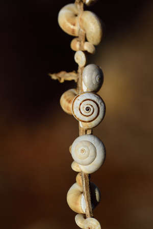 Close-up of a dry branch with many different snail shells hanging against a brown background in vertical format