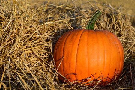 An orange Halloween pumpkin stands in dry straw in the country Zdjęcie Seryjne