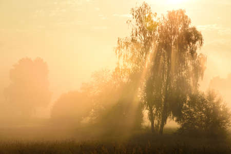 In autumn in the morning the sun rises behind the trees, behind the morning mist, which creates a magical atmosphere