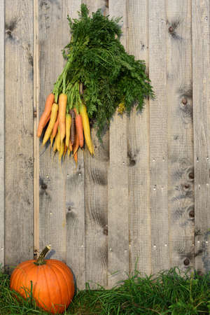 Against a rustic wooden wall, in front of which an orange pumpkin lies, on a green meadow, in autumn, with space for text. A bunch of colored carrots hangs over it