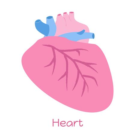 Heart illustration in flat style. Viscera icon, internal organs. Illustration