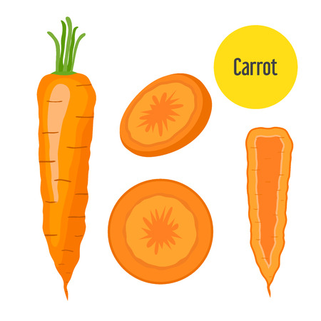 Set of carrot. Sliced, chopped sweet carrot in flat  style.