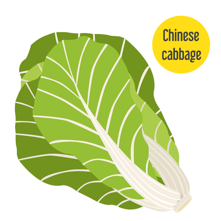 Illustration of chinese cabbage. Flat style for markets, farms and gardens.