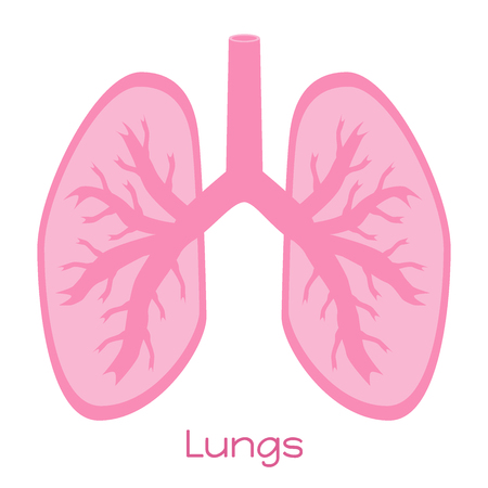 Lungs illustration in flat style. Viscera icon, internal organs.