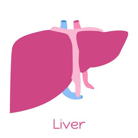 hepatic portal vein: Liver illustration in flat style. Viscera icon, internal organs.