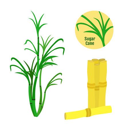 Sugar cane set. Flat style. Organic food, sugarcane. Rum natural source
