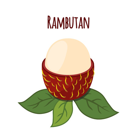 rambutan: Rambutan tropical fruit. Exotic vitamin nutrition. Flat style. Organic nutrition