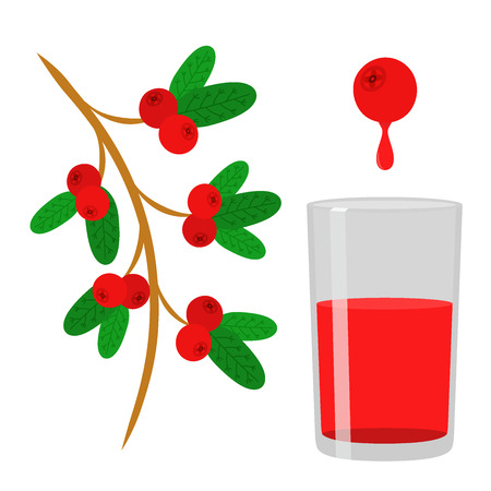 Cowberry, lingonberry in flat vector style. Sweet red forest berry. Berry juice. Cranberry.