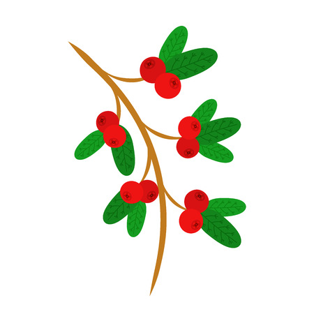 Cowberry, lingonberry in flat vector style. Sweet red forest berries on the branch. Cranberry. Illustration