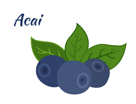 Super food acai berry. Exotic fresh amazon nutrition. Flat vector style.