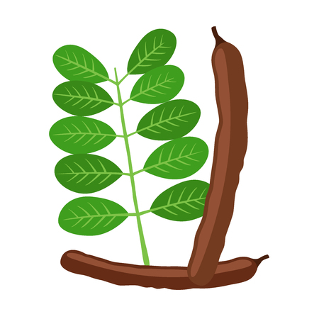 Carob pods,  leaves. Superfood. Vegetarian decaffeinated food. Flat vector style.