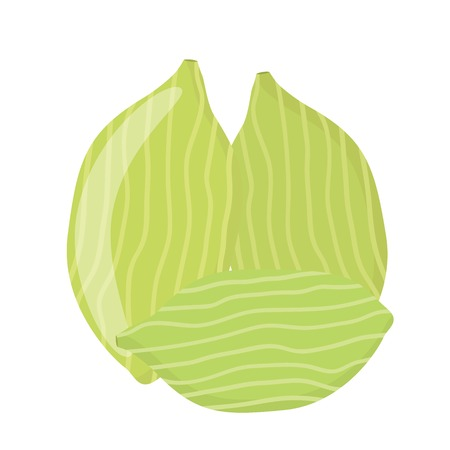 Cardamom spice for food in cartoon flat style. Healthy organic ingredient.
