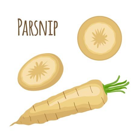 catroon: Fresh parsnip vegetable. Organic vegetarian food. Catroon flat style. Healthy plant. Illustration