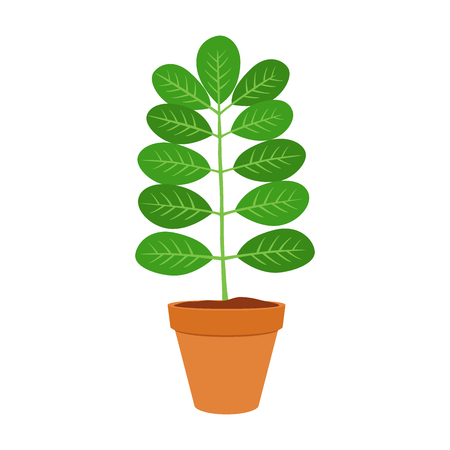 marango: Moringa, vegetarian superfood. Healthy nutrition. Herb, vegetable, powder, tree in flowerpot. Cartoon flat vector style. Illustration