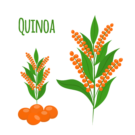 Quinoa set. Seeds, healthy quinoa vegetarian food. Cartoon flat vector style.