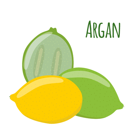 treatment plant: Argan fruit. Herbal cosmetics, eco therapy. Natural product. Cartoon flat style.