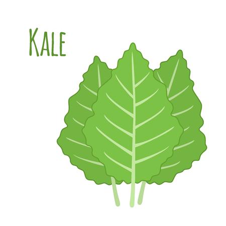 kale: Kale vegetable in cartoon flat style. Organic healthy leaf. Natural fresh salad.