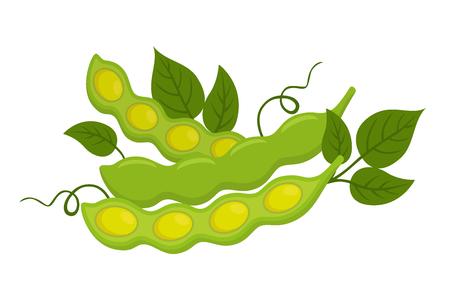 Natural organic soybeans. Eco-friendly vegetarian nutrition. Made in cartoon flat style. Illustration