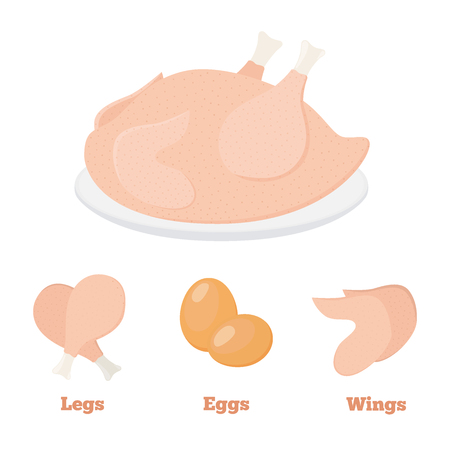 Chicken products vector illustration.