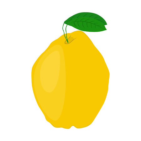 Quince healthy fruit. Vegetarian food, made in cartoon flat style. Organic product.