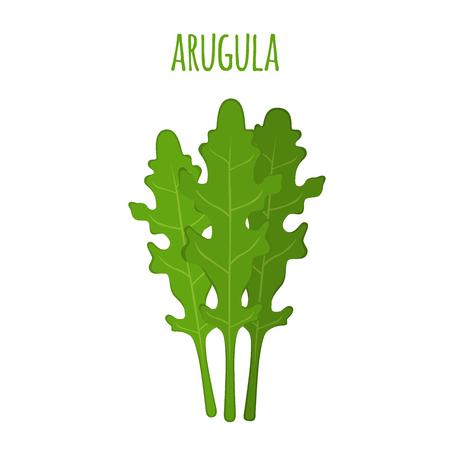 Arugula leaf. Vegetarian green vegetable. Farm market salad. Made in cartoon flat style Stock Vector - 81000013