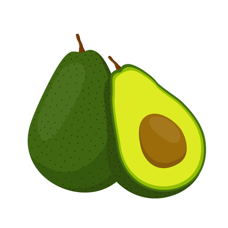 Avocado whole and slice. Tropical summer fruit. Made in cartoon flat style Illustration