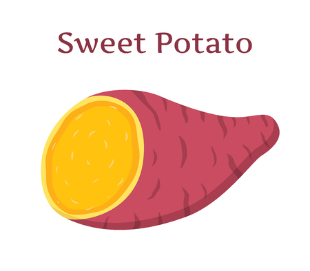 Brown batat, sweet potato. Organic healthy vegetable. Fresh natural root. Made in cartoon flat style Illustration