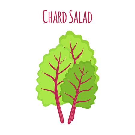 Chard salad, leaf of swiss plant, vegetarian nutrition. Made in cartoon flat style. Vector illustration Illustration