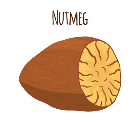 Nutmeg, organic nut, healthy vegetarian food. Natural spices. Made in cartoon flat style. Vector illustration Ilustração