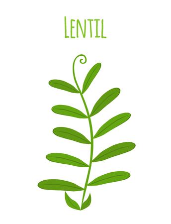 Legume plant, soybeans, lentil bean. Made in cartoon flat style. Vector illustration. Illustration