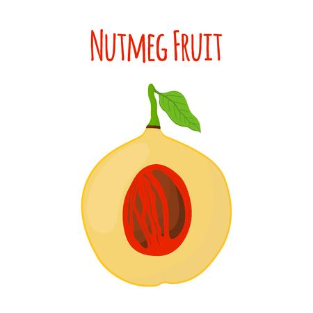 Nutmeg fruit. Healthy vegetarian food.  Made in cartoon flat style. Vector illustration Illustration