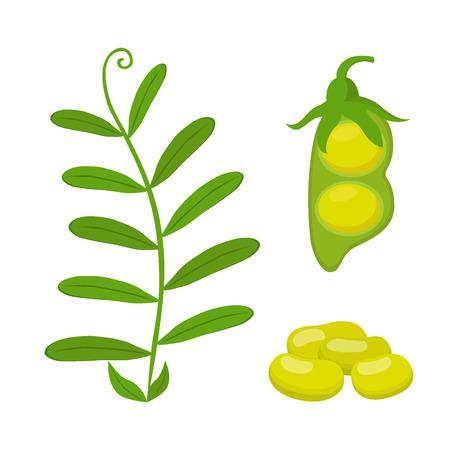 soy bean: Legume plant, soybeans, lentil bean. Made in cartoon flat style. Vector illustration