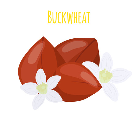 Buckwheat seeds in cartoon flat style illustration.